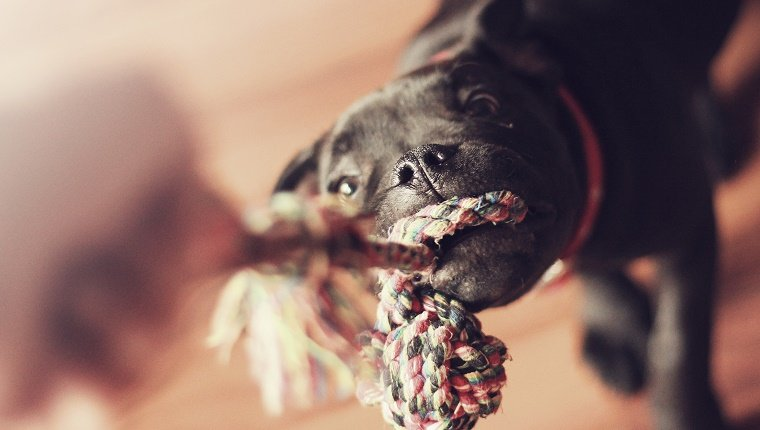 tug of war, playing with dog, bokeh