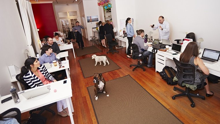 People at work in a modern office with dogs