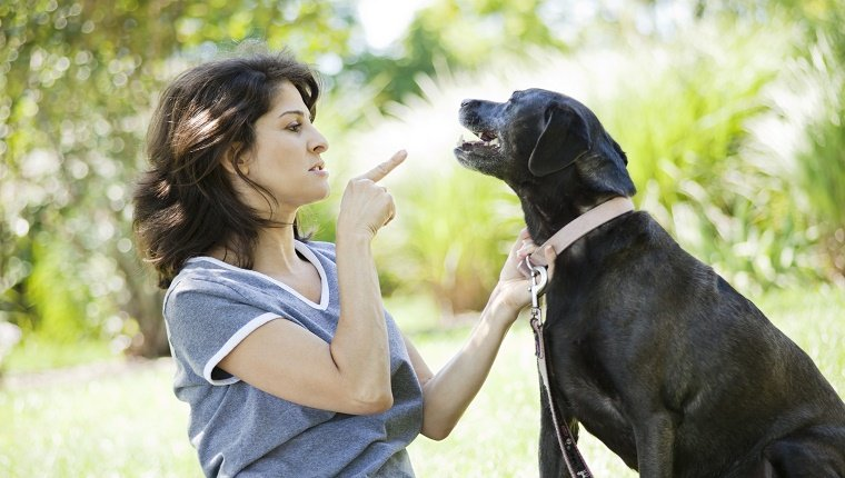 Dog Training: Most Common Mistakes