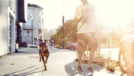 5 Mentally Stimulating Games You Can Play While Walking Your Dog