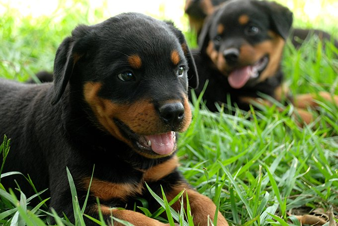 What To Give Dogs For Gassy Stomach