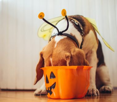 What To Do If Your Dog Eats Halloween Candy