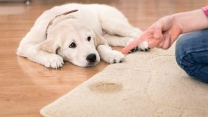 10 Things Dog Owners Know About Potty Training