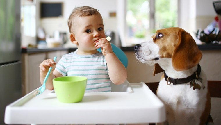 A 1 year old boy eating next to his dog