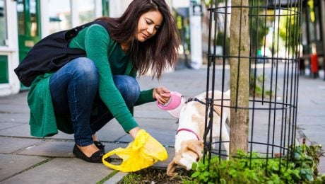 What Your Dog's Poop Tells You