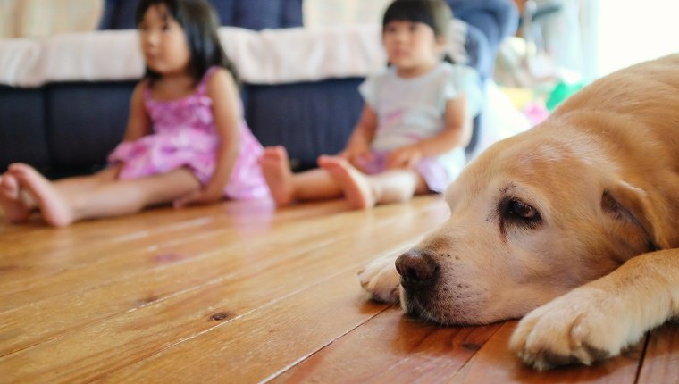 Two little girls sit on the floor and watch TV with a big labrador dog.
