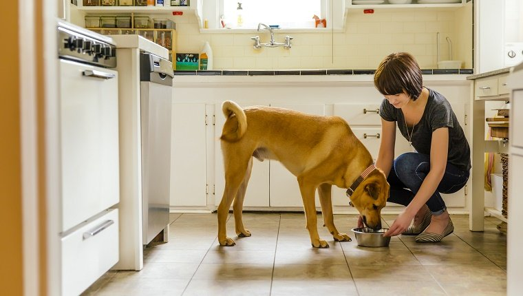 Caucasian woman feeding dog in kitchen