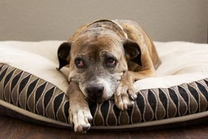 Does Your Dog Suffer From Seasonal Affective Disorder?
