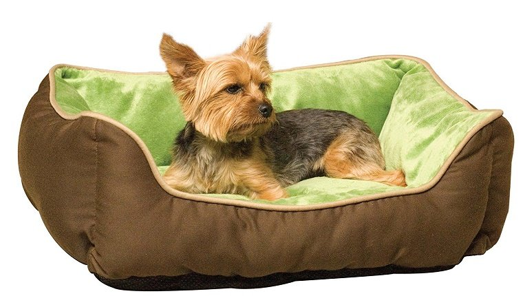 essential-holiday-travel-items-dogs-5