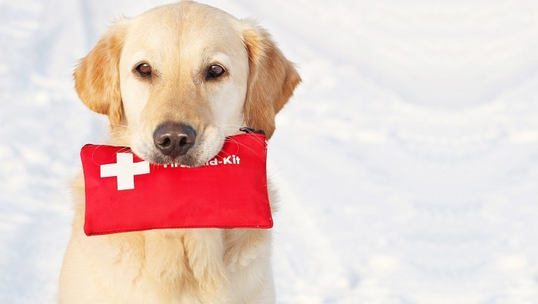 Golden Retriever holding First-Aid-Kit in the snow, copy space