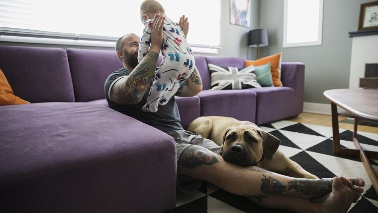 Dog laying by father baby son living room