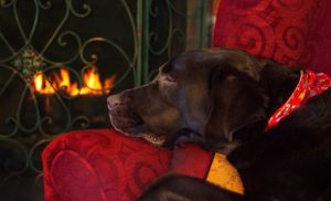 Adorable Dogs Warming Themselves By The Fire [PICTURE GALLERY]