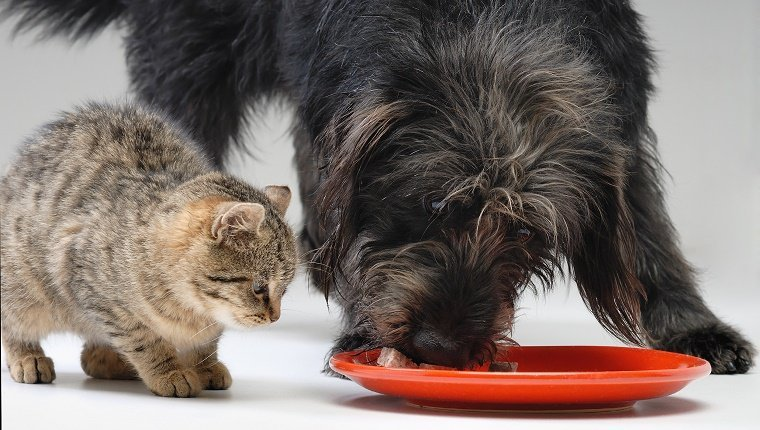 Dog And Cat Eat