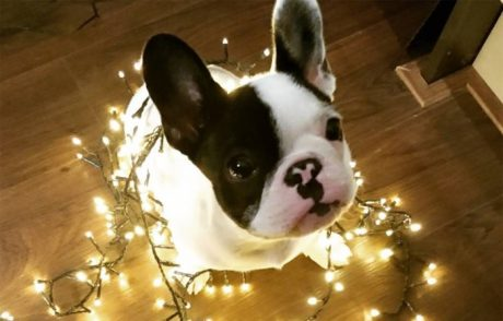 Cutest Christmas Puppies On Earth [PICTURES]