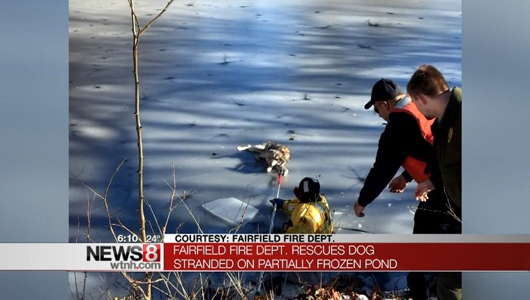 delilah-dog-stuck-icy-pond-rescued