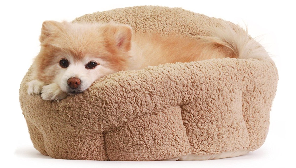 dog-bed