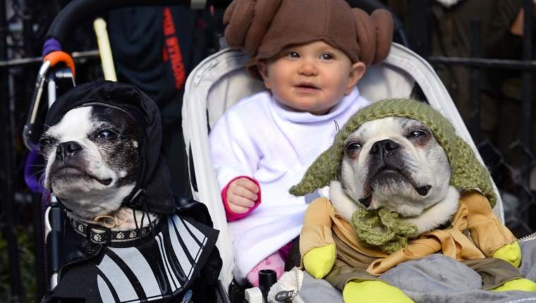 "Dogs and baby dressed as characters from ""Star Wars"" attend the 23rd Annual Tompkins Square Halloween Dog Parade on October 26, 2013 in New York City. Thousands of spectators gather in Tompkins Square Park to watch hundreds of masquerading dogs in the countrys largest Halloween Dog Parade. AFP PHOTO / TIMOTHY CLARY"