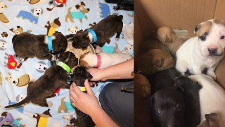 Jogger Hears Yelps And Finds 19 Abandoned Puppies Left In A Box
