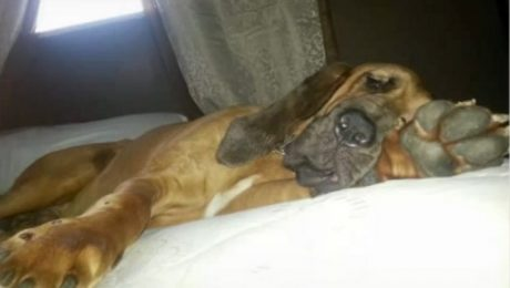 Family Refuses To Return Army Private's Dog After He Was Given Away By Caretaker – UPDATE
