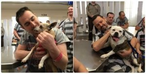 Program Brings Recovering Abused Dogs To Help Veteran Inmates In Jail