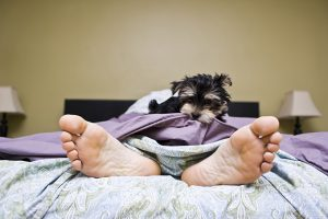 Things Only Puppy Parents Know About Getting Ready In The Morning