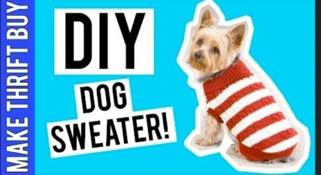 DIY Dog Sweater [VIDEO]