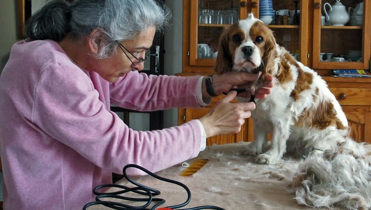 Hair cut session for our spaniels at the beginning of spring.