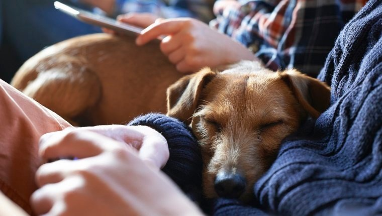 Dogs' Sleeping Positions And Habits Tell You A Lot About
