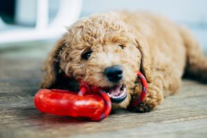 Ways To Help your Dog Live Longer