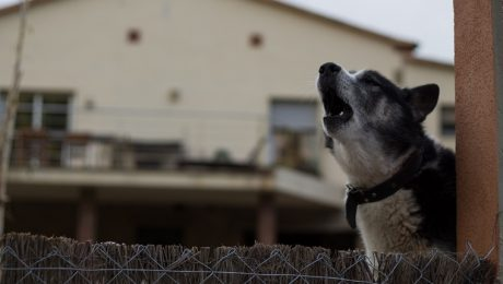 How Do You Get Your Neighbor's Dog To Stop Barking?