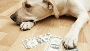 Oregon Considers Bill To Give Tax Credit For Pet Adoptions