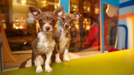New San Francisco Law Requires All Pet Stores To Sell Rescue Dogs And Cats Only