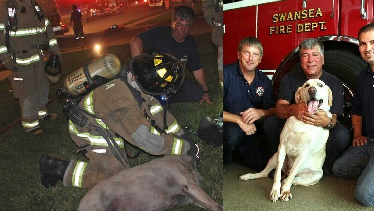 emergency-responders-adopt-dogs-2
