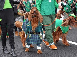 Best Dog Breeds To Celebrate St. Patrick's Day With