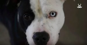 Covered In Wounds, Justice Recovers From Horrific And Violent Past [VIDEO]