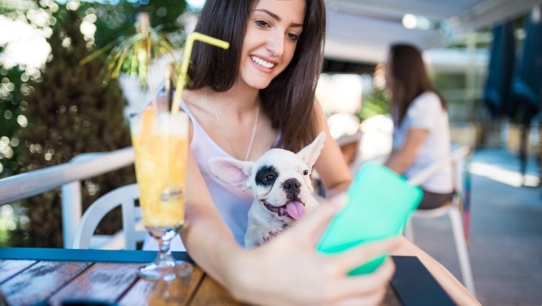 Young brunette woman in cafeteria talking selfie with adorable French bulldog puppy in her lap.