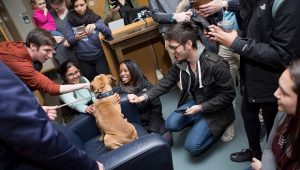 10 Reasons Every College Dorm Should Have A Therapy Dog