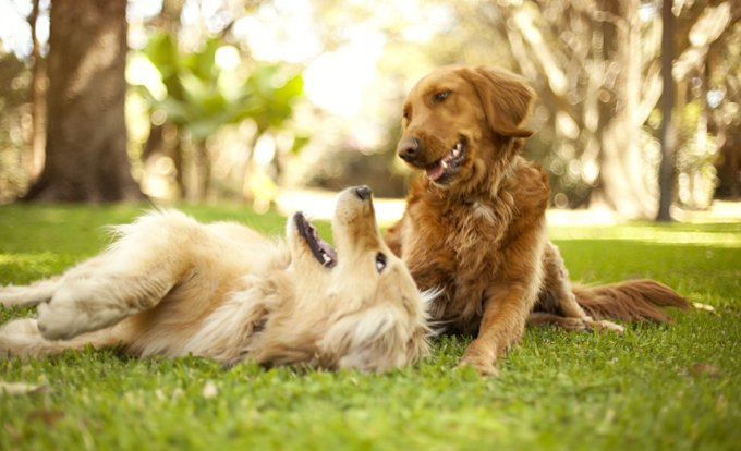 Flea Grooming For Dogs