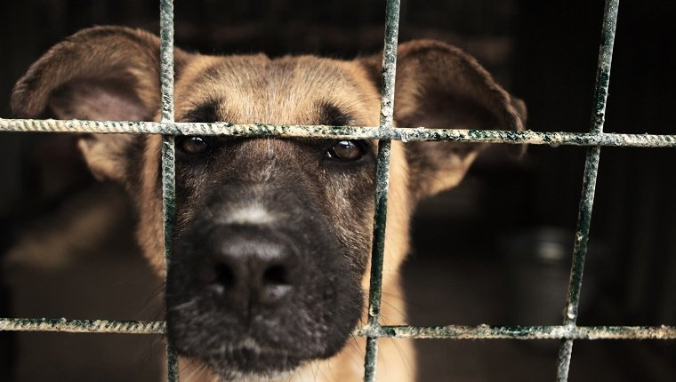Stray dog in kennel with snout peeking out through the bars of the cage.
