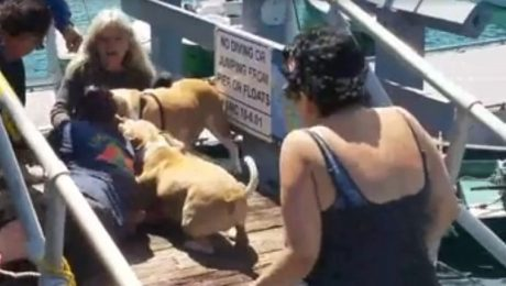 7 Ways This Horrific Dog Fight Could Have Been Avoided