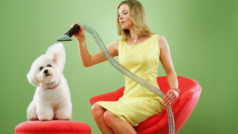 Woman sitting on chair, vacuuming Bichon Frise