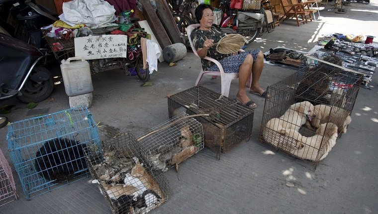 This picture taken on June 17, 2015 shows a woman selling dogs and cats by a street in Yulin, in southern China's Guangxi province. People from Yulin traditionally celebrate the solstice during midsummer on the longest day of the year by eating dog meat and lychee fruit, which draws criticism from animal rights activists. CHINA OUT AFP PHOTO (Photo credit should read STR/AFP/Getty Images)
