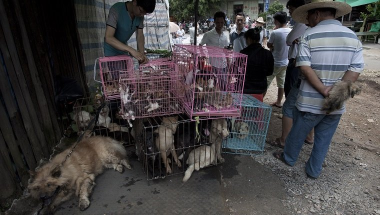 Chinese customers check out dogs in cages on sale at a market in Yulin, in southern China's Guangxi province on June 21, 2015. The city holds an annual festival devoted to the animal's meat on the summer solstice which has provoked an increasing backlash from animal protection activists. CHINA OUT AFP PHOTO (Photo credit should read STR/AFP/Getty Images)