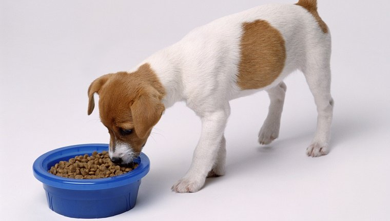5 eating disorders that affect dogs   dogtime