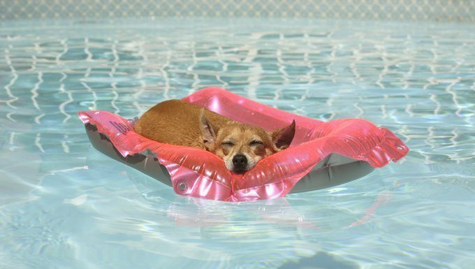 dog sleeping on a raft in the pool