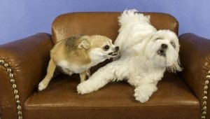 Dog Growling: What It Means And What You Should Do