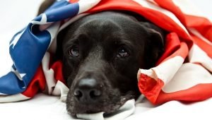 5 Things Humans Do To Make 4th Of July Fireworks Fear & Anxiety Worse For Their Dogs