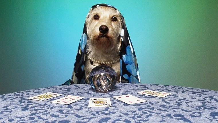 Dog dressed as fortune teller, at table with crystal ball