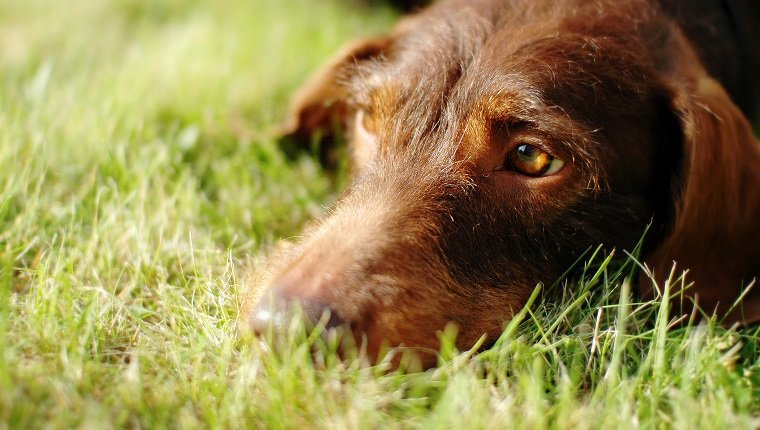 dog skin dogtime abscesses in dogs causes symptoms and