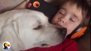 Dog Changes The Life Of A Boy With Autism [VIDEO]